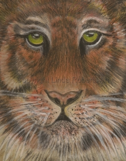 Tiger in Oil Pastels