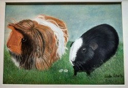 "Peruvian and Rexel (Teddy) Guinea Pigs ""Paddington and Domino"""