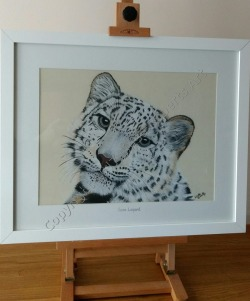 Snow Leopard in Soft Pastel
